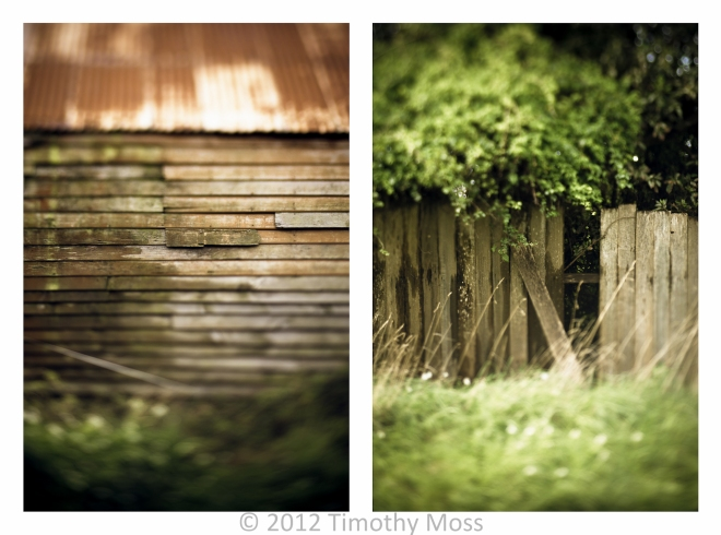 Fences-Vegetation-Lensbaby