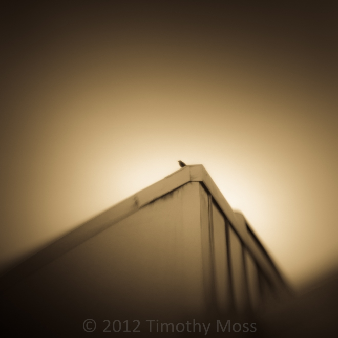 Bird-Roof-Lensbaby