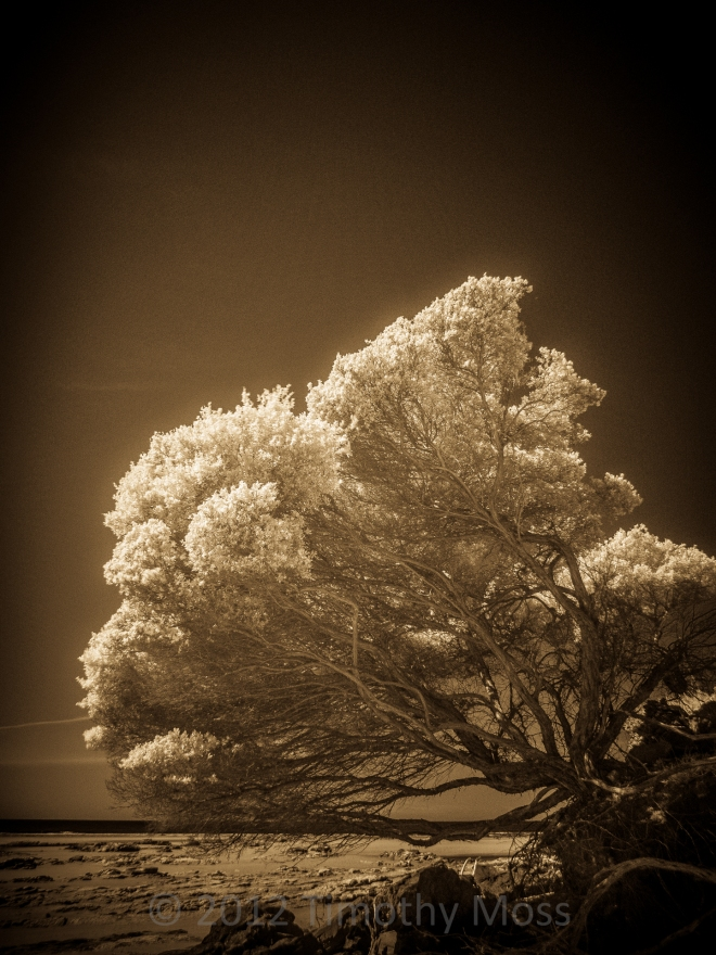 IR-Tree-toned