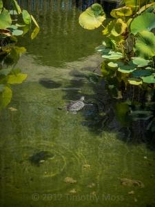 Turtle-SD