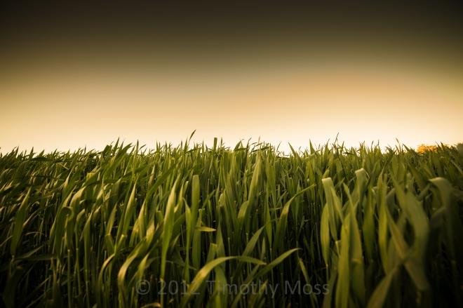 Field-Burnie