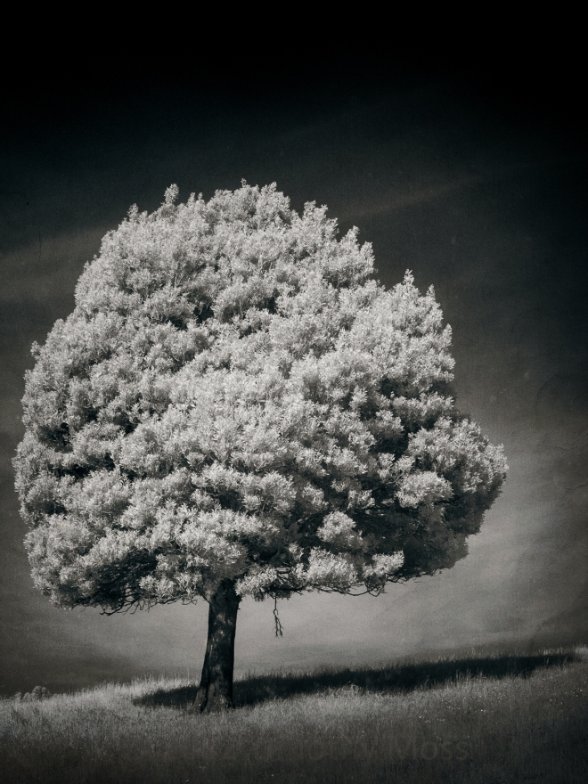 Textured-tree-IR