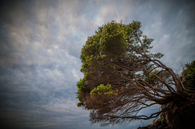 Tree-portrait-14mm