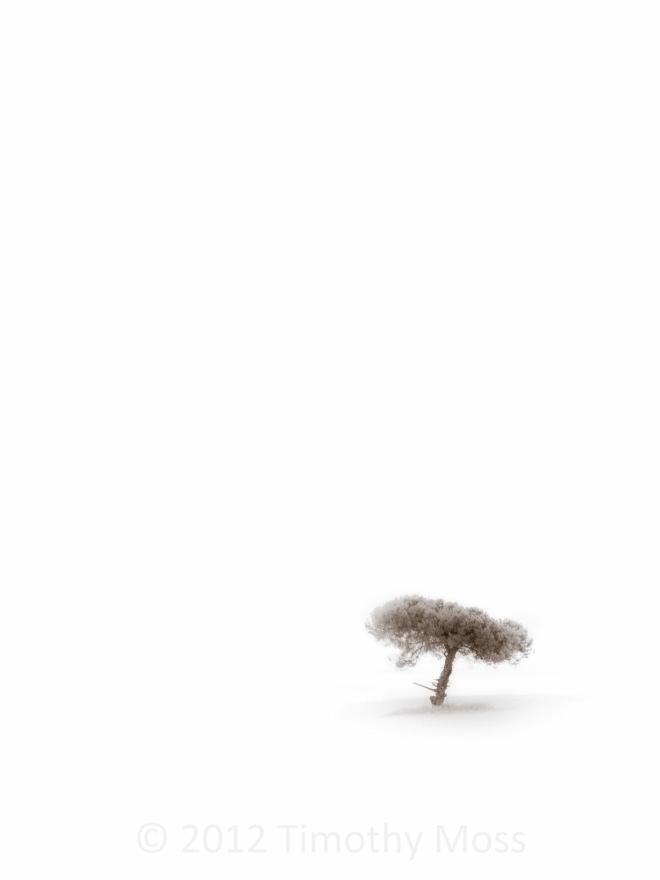 IR-Tree-High-Key